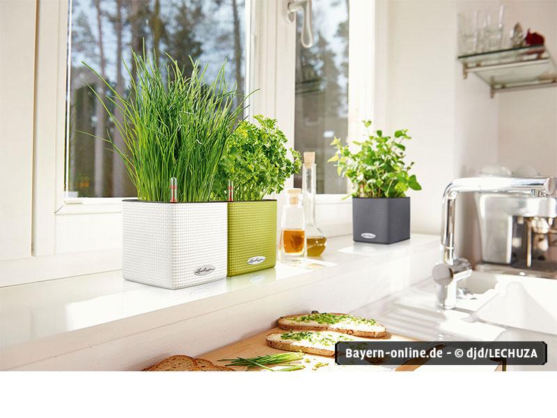 gesundes gr n von der fensterbank. Black Bedroom Furniture Sets. Home Design Ideas